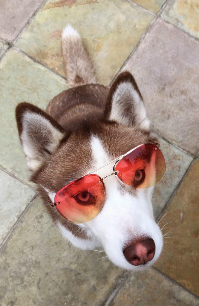 Fashionable pets, stylish dogs